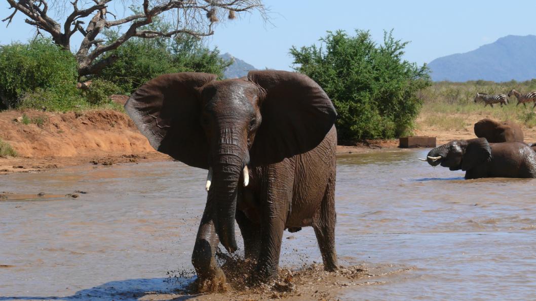 tsavo_elephants