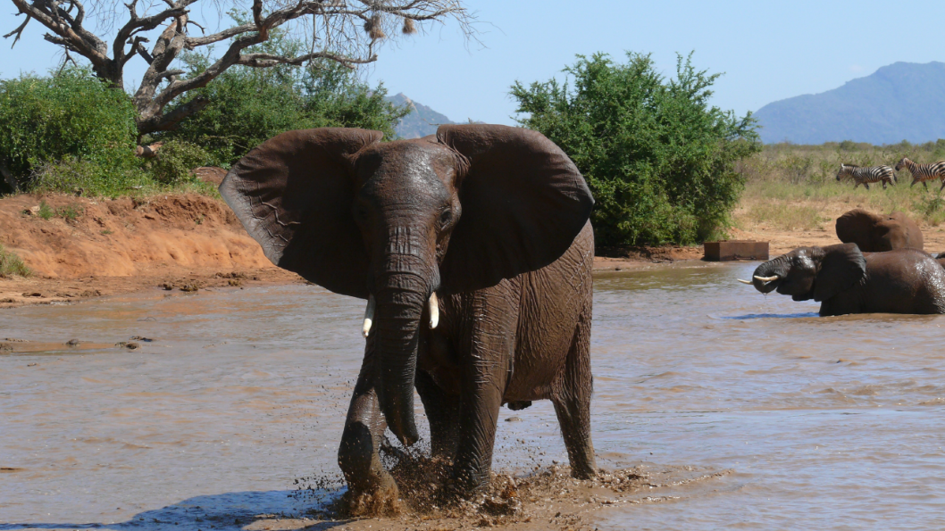 tsavo_elephants